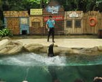 Shows at the Singapore Zoo
