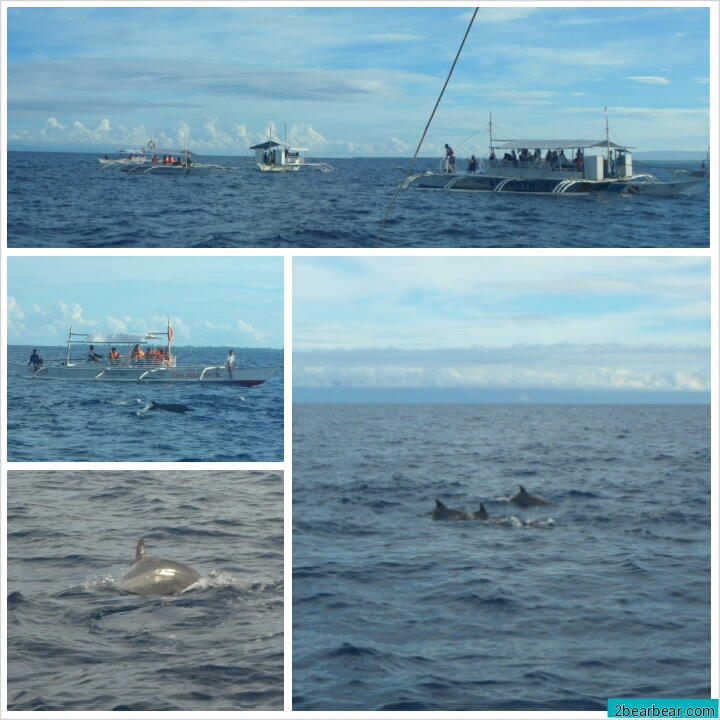 Dolphin and Island Hopping Tour (Pamilacan, Balicasag, Virgin sandbar)