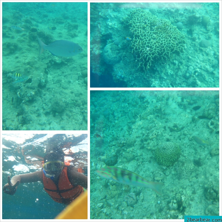 Cebu Bohol Trip Day 6