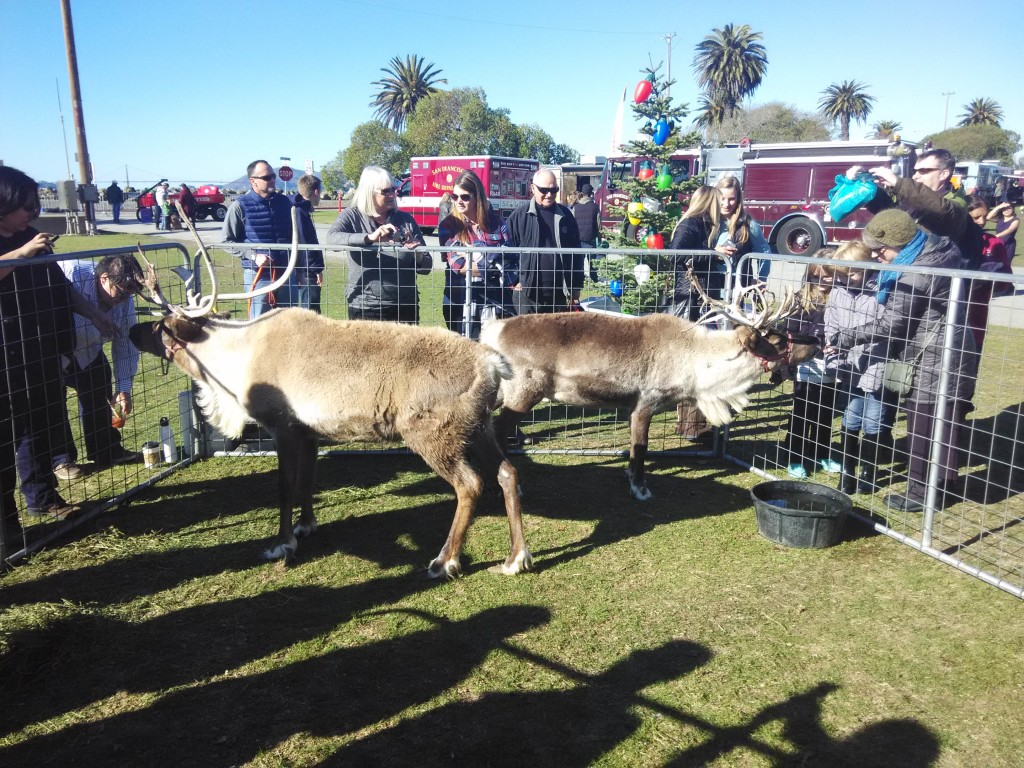 A pair of reindeers at San Francisco Treasure Island Flea Market