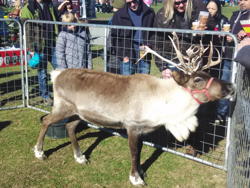 Close up of Reindeer at Treasure Island Flea Market