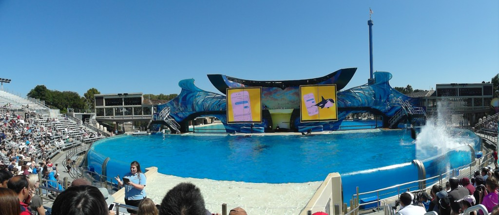 Panorama of Killer Whale show