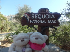 Sequoia National Park 2bearbear