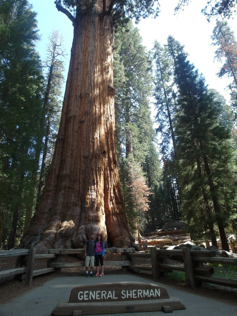 General Sherman Sequoia National Park