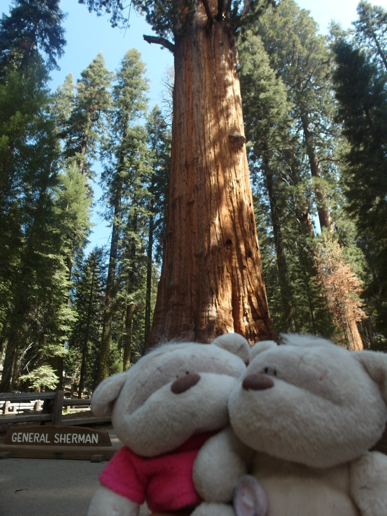 General Sherman Sequoia National Park 2bearbear