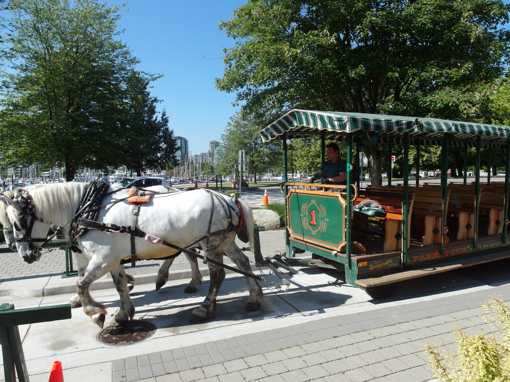 Horse and Carriage Stanley Park