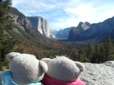 2bearbear @ Yosemite National Park