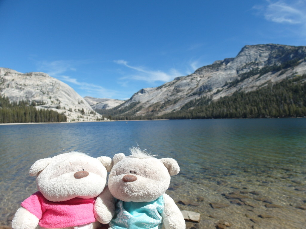 2bearbear @ Tenaya Lake Yosemite National Park