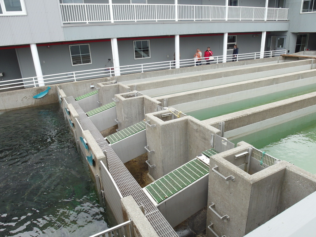 Salmon Fish Ladder