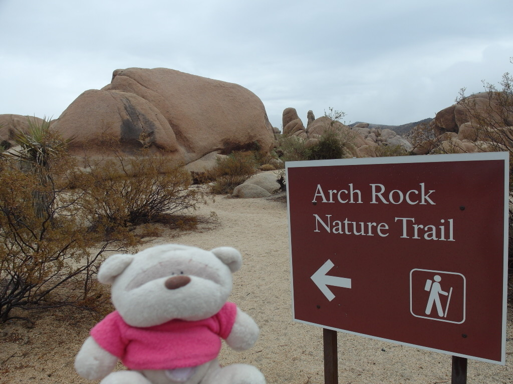Arch Rock Nature Trail Joshua Tree National Park