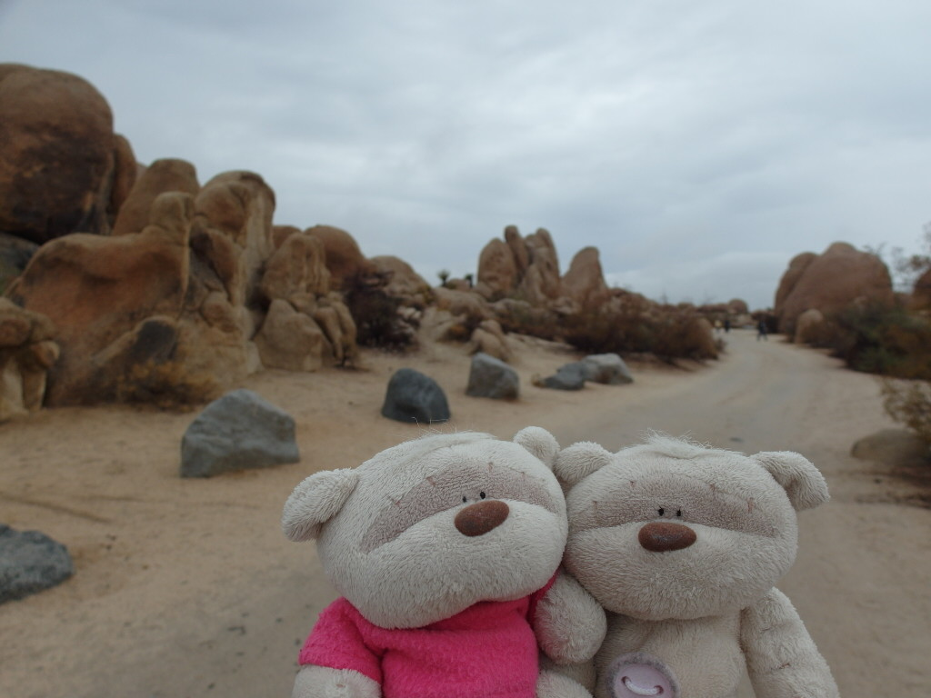 2bearbear @ Arch Rock Nature Trail