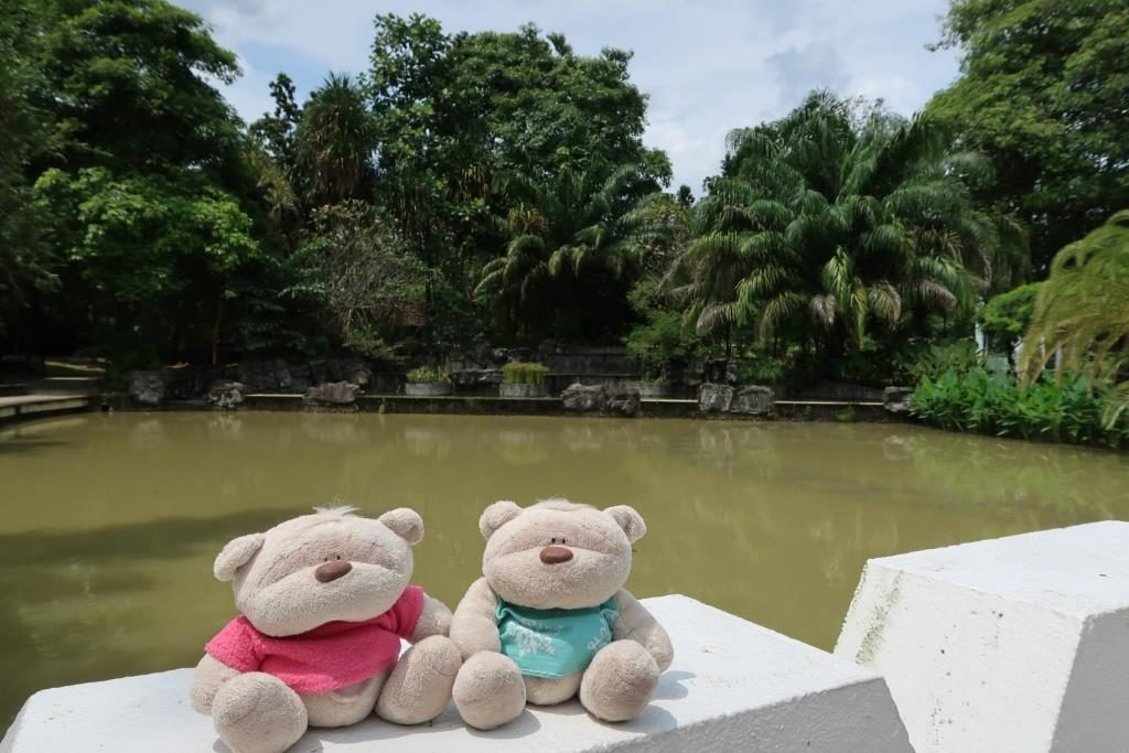 Pond @ Toa Payoh Town Park: Home to the butterflies, dragonflies and damselflies