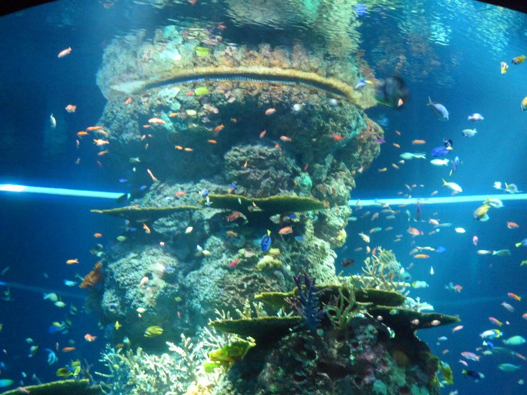 SEA Aquarium Singapore : World's Largest Aquarium at ...